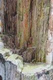 Dettaglio di vecchia roccia Fotografia Stock Libera da Diritti