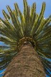 Dettaglio esotico dell'albero Fotografia Stock Libera da Diritti
