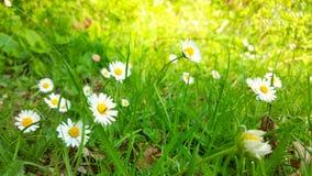Dettaglio fantastico in natura Il prato è pieno dei fiori immagini stock