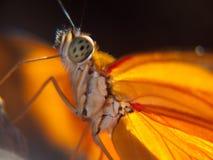 Dettaglio giallo della farfalla immagine stock