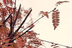Dettaglio grafico del fogliame di autunno in un colore arancio caldo decorativo il giorno di ringraziamento ad ottobre fotografia stock