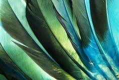 Dettaglio indiano delle piume dell'anatra del nativo americano Fotografie Stock Libere da Diritti