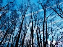 Dettaglio nudo degli alberi Fotografie Stock