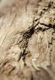 Dettaglio sparato delle strutture di legno al sole immagini stock