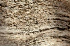 Dettaglio sparato delle strutture di legno al sole fotografie stock libere da diritti