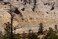 Dettaglio, strati correnti dell'incrocio di arenaria colorata Immagini Stock