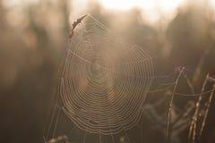 Dettaglio su un primo mattino della ragnatela in autunno Fotografia Stock Libera da Diritti