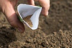 Dettaglio sui semi degli spinaci in una borsa Fotografia Stock