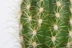 Dettaglio verde del cactus Immagini Stock Libere da Diritti