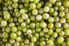Dettaglio verde dell'uva Priorità bassa sana dell'alimento Fotografia Stock Libera da Diritti