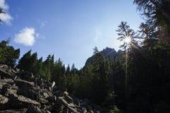 Detunata światło słoneczne Obraz Royalty Free