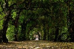 Deur in een tunnel van bomen Royalty-vrije Stock Afbeeldingen
