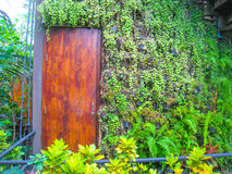 Deur en het planten van muur Royalty-vrije Stock Foto
