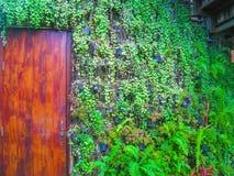 Deur en het planten van muur Stock Foto