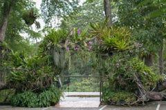 Deurenboom Royalty-vrije Stock Foto's
