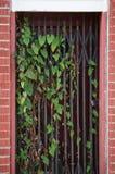 Deurmanier met poorten met wijnstokken Stock Foto