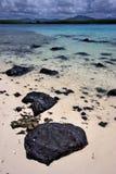 Deus Cocos in Mauritius Stockbild
