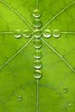 Deus transversal da natureza da folha Fotografia de Stock