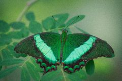 Deusa verde Fotos de Stock Royalty Free