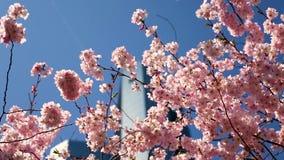 Deutsche Bank Francoforte através das flores, foco da cremalheira vídeos de arquivo