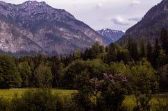 Deutsche Grünfläche und Alpen Lizenzfreies Stockbild