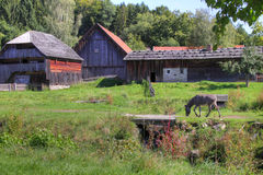 Deutsches Bauernhaus mit Esel Stockfoto