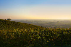 Deutsches Weinfeldpanorama stockfotografie