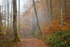 Deutschland, Berchtesgadener-Land, Herbstwald, Nebel Lizenzfreie Stockbilder