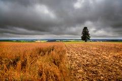 Deutschland-Landschaft, Feld und einzelner Baum Lizenzfreies Stockfoto