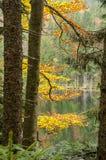 Deutschland, See Arbersee stockbild