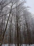 Deutschland-Winter-Wald lizenzfreie stockfotos
