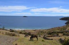Deux ânes au lac Titicaca, Bolivie Photo stock