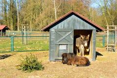 Deux ânes se reposant dans un pré photographie stock libre de droits