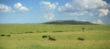 Deux éléphants marchant par le masai Mara Photo stock