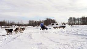 Deux équipes de chiens de traîneau avec des mushers clips vidéos