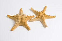 Deux étoiles de mer Image libre de droits