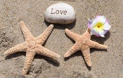 Deux étoiles de mer avec la roche sur la plage Photo stock
