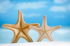 Deux étoiles de mer géantes avec le sable, l'océan, la plage et le paysage marin blancs images stock