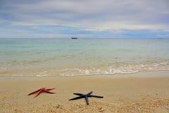 Deux étoiles de mer se trouvant sur la plage sablonneuse Photos stock