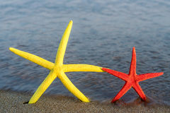 Deux étoiles de mer sont prochaines au bord de la mer Photos libres de droits