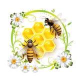 Deux abeilles et nids d'abeilles Photographie stock