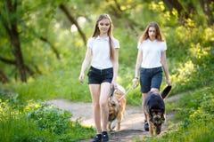 Deux adolescentes marchant avec ses chiens en parc Images stock