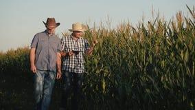 Deux agriculteurs dans un domaine de maïs vérifient la qualité des usines de maïs Vidéo au coucher du soleil clips vidéos