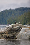 Deux aigles chauves sur le rivage rocheux Photographie stock libre de droits