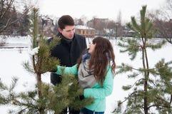 Deux amants marchent en parc d'hiver près des pins Photographie stock