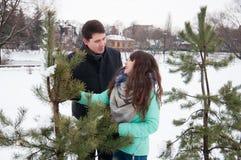 Deux amants marchent en parc d'hiver près des pins Images libres de droits