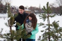 Deux amants marchent en parc d'hiver près des pins Photos stock