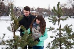 Deux amants marchent en parc d'hiver près des pins Images stock