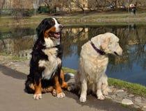 Deux amis Photographie stock