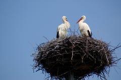 Deux amis - couples de cigogne sur l'emboîtement sur le ciel bleu Image stock